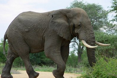 elephant-feet-walking.jpg